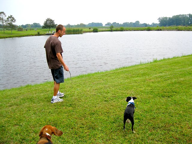 playing fetch with the dogs