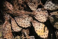 IMG_9509 (simon_travelboy) Tags: arizona tucson saguaronationalpark