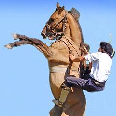 A la pucha! (Eduardo Amorim) Tags: horses horse southamerica argentina caballo cheval caballos cavalos pferde cavalli cavallo cavalo gauchos pferd pampa hest hevonen chevaux gaucho  amricadosul hst gacho  campero amriquedusud provinciadebuenosaires  gachos  sudamrica sanantoniodeareco suramrica amricadelsur  areco sdamerika jineteada   pampaargentina camperos americadelsud gineteada  americameridionale campeiros campeiro eduardoamorim travelsofhomerodyssey iayayam yamaiay pampaargentino