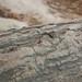Termite in Coba