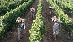 Europa: Las Denominaciones de Origen europeas contra la liberalización de plantaciones de viñedo