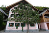 09-Apple tree in Hallstatt