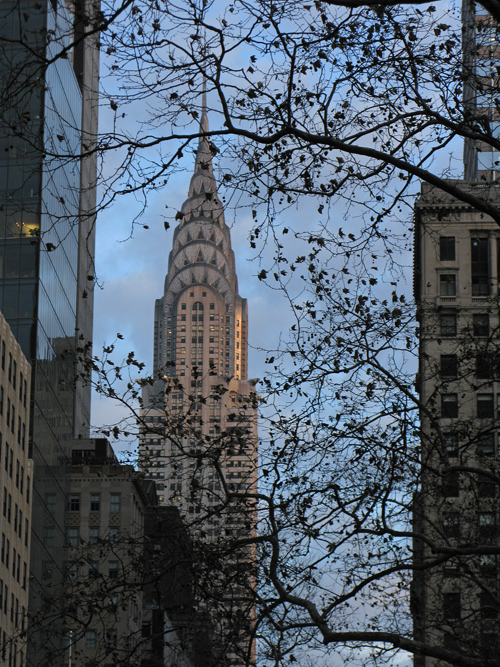 the Chrysler Building seen through a 42nd Street tree, Manhattan, NYC