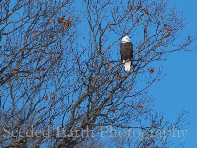 Roosting Near the Mississippi River