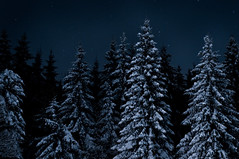 Winter trees (John Erik) Tags: trees winter cold ice oslo night forest stars 50mm lights frozen frost d300 asker 50mmf14af vestmarka