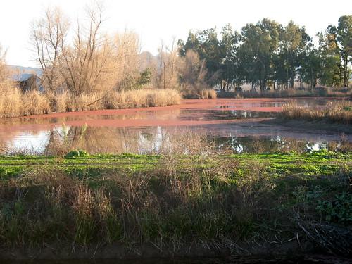 Watery Sacramento valley landscape