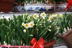 Narciso, flor típica del año nuevo chino