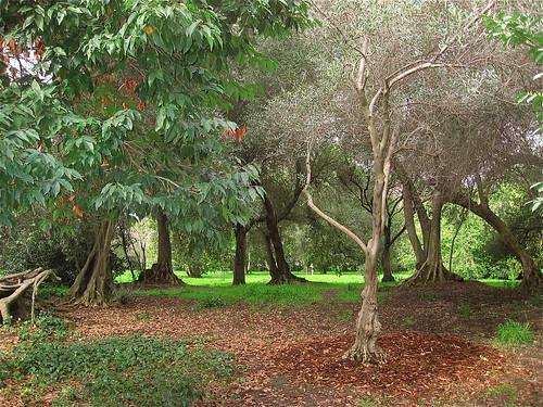 Stanford Campus Arboretum