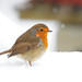 Robin (Erithacus rubecula) on Snow Covered Birdbath