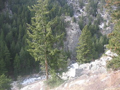 View from Rivierra to Boulder Canyon Creek
