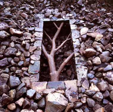 Goldsworthy Boxed Tree