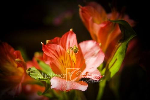 Flower 09_003blog
