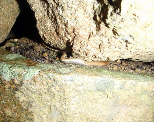 tiny ground snake6