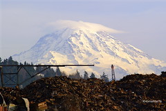 Mountain of Scrap (romamar76) Tags: washington mountrainier rainier tacoma scrapyard marineviewdrive