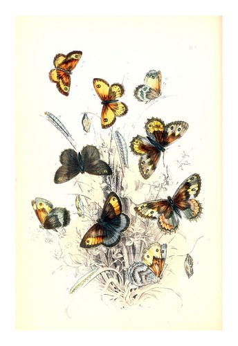 mariposa7