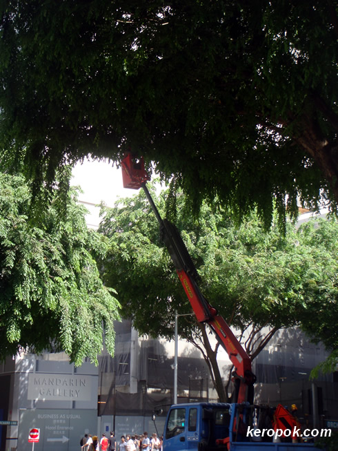 Tree pruning along Orchard Road