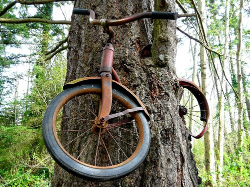 Dont Leave Your Bicycle Next To A Tree For 30 Years by sea turtle