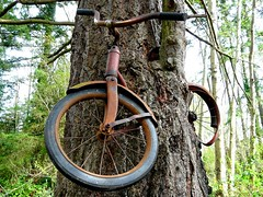 Don't Leave Your Bicycle Next to a Tree for Thirty Years (sea turtle) Tags: tree bike bicycle rust time landmark washingtonstate passageoftime vashon vashonisland bikeintree bicycleintree