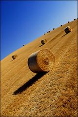 Rotolando verso casa (casafrance) Tags: landscape campagna tuscany toscana toscane paesaggio paglia grano campi rotoballe rotoli collesalvetti ss206