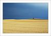 Korn (MaddixLuxx) Tags: pentax korn ernte getreide weizen roggen fa50 dingsbums k10d ashowoff