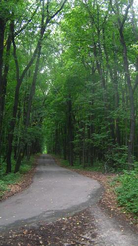 3830125931 6af231c0c1 Тайны леса надевятом километре