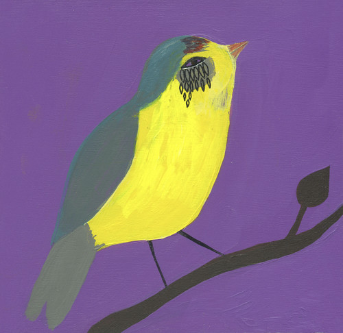 wilson warbler