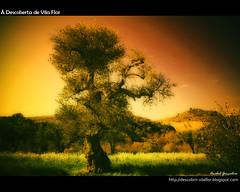 Descoberta de Vila Flor (Transmontano) Tags: tree portugal award soul arvores legacy bragana oliveira braganca vilaflor ribeirinha imagepoetry xoox specialtouch transmontano ilustrarportugal srieouro absolutelystunningscapes colorsofthesoul artistictreasurechest themonalisasmile soulaward addvf iniciaticaward portugalmagico