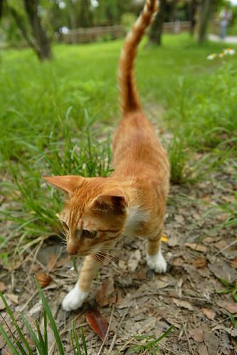 貓咪。甚至玩起了捉迷藏