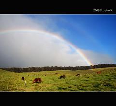 ranch (m*yoko) Tags: flickrdiamond updatecollection