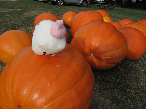 Tofu Baby falls off the pumpkin.
