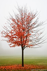 Autumn Surrender (James Marvin Phelps) Tags: park autumn trees lake color fall fog outdoors metro michigan erie mandj98 lakeeriemetropark jmpphotography jamesmarvinphelps brownstownmichigan rockwoodmichigan autumnsurrender