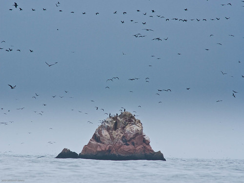 Birds on Islas Ballestas