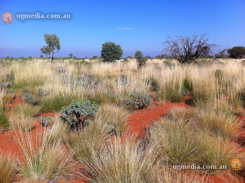 Spinifex sand plain