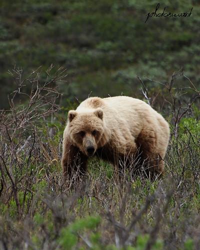 bear1w