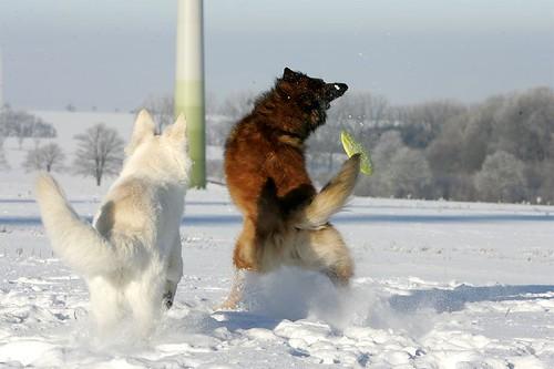 Frisbee spielen im Schnee