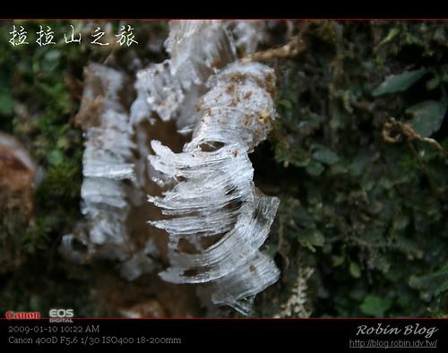 你拍攝的 20090110數位攝影_拉拉山外拍052.jpg。