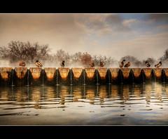 Le Anatre (CARLORICCI) Tags: nikon bravo budapest ducks carlo castello laghetto d300 anatre abigfave bratanesque vosplusbellesphotos