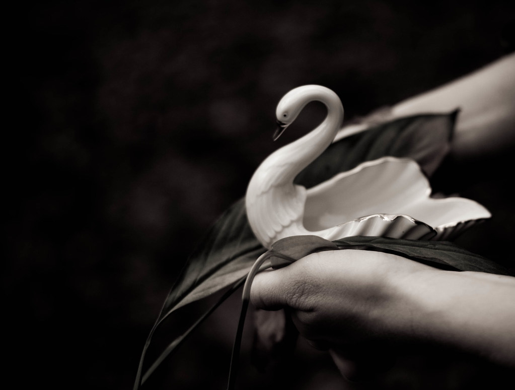 Because no home is complete without a swan. Period.