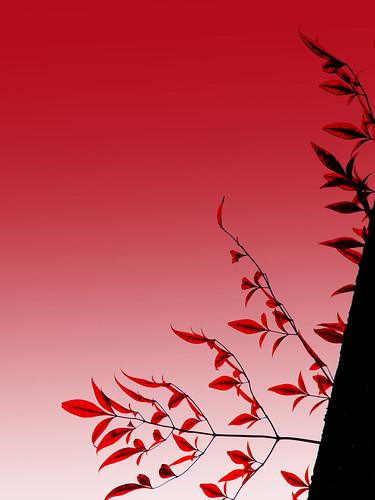 090211[ee[l[東京大仏・赤塚植物園064