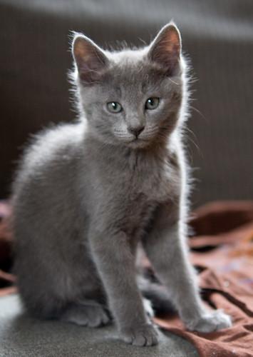 Kittens of Pegusha - Page 3 3299920365_f7f5123f0d