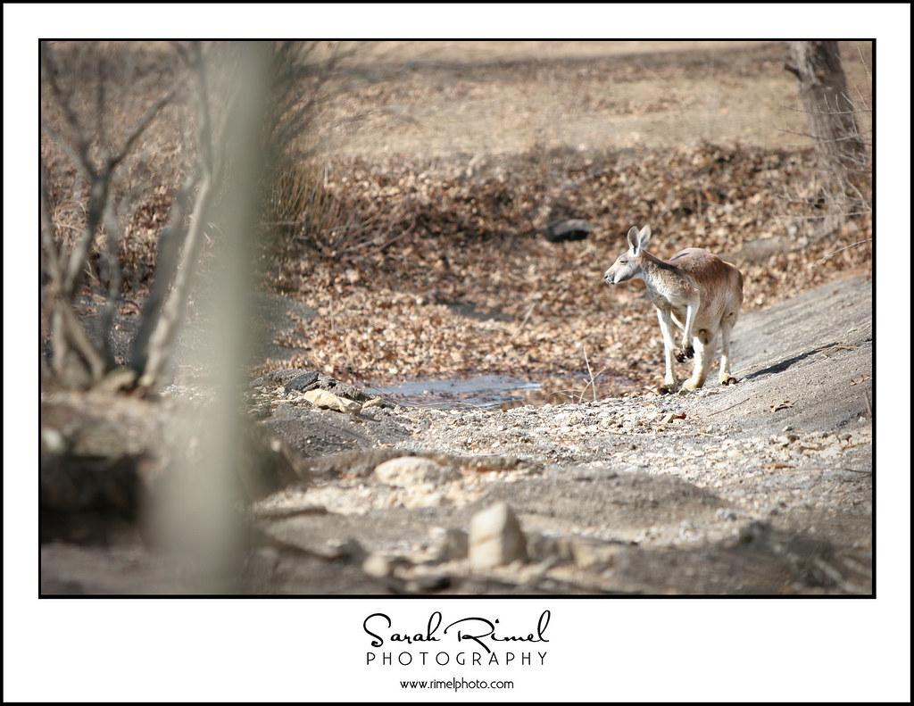 feb zoo 11