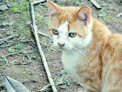 Gatinhooo (Rapha Campos) Tags: cat gato felino
