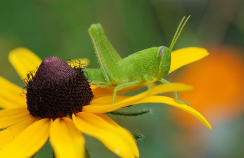 Grasshopper4 071109