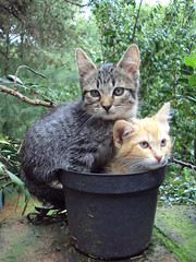 Potcat (Dahn Esteva) Tags: cats baby cat kitten funny kitty gatos gato gatito bestofcat