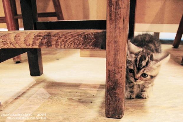 步調咖啡小小貓01.JPG