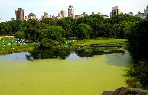 Green Central Park