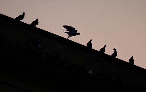 081909_birds1_kl