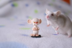 The world will be mine, Brain! (Honey Pie!) Tags: cute toy mouse brinquedo brain mice albino fofo susto fancymice sallybrown camundongo crebro thepinkyandthebrain opinkyeocrebro
