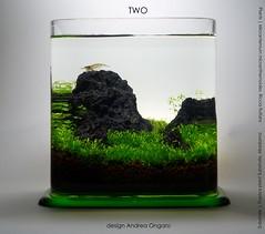 two liters (Andy_Online) Tags: aquarium aquascape tropica caridinajaponica acquari duelitri
