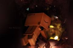 danbo 尋寶... (sⓘndy°) Tags: sanfrancisco toy toys box figure figurine sindy kaiyodo yotsuba danbo revoltech danboard 紙箱人 阿楞 amazoncomjp